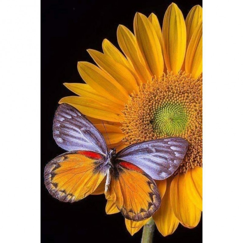 Butterflies and Sunflower...